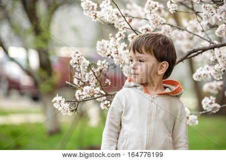 Toddler Boy In Spring Time Near The Blossom Tree