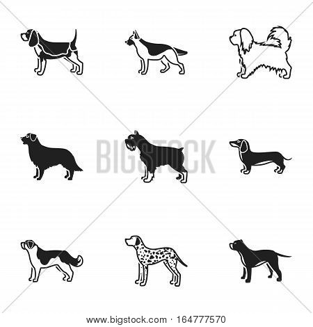 Dog breeds set icons in black style. Big collection of dog breeds vector symbol stock