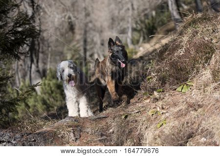 Two cute dog friends together exploring the world