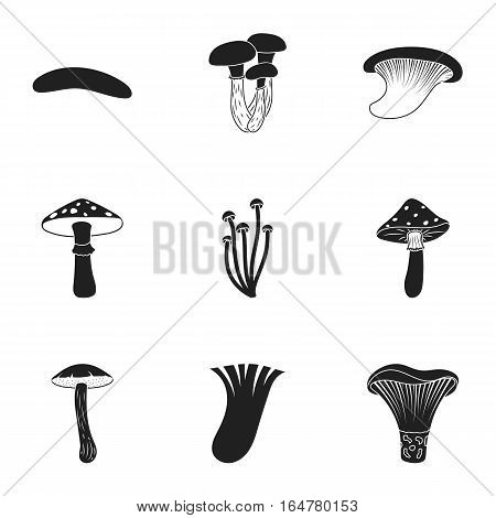 Mushroom set icons in black style. Big collection of mushroom vector symbol stock