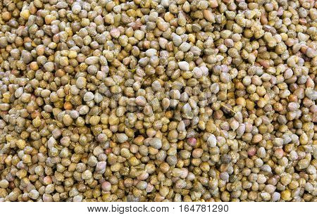 Background Of Many Small Green Capers
