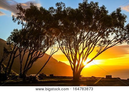 Scenic landscape with african trees at sunset in the Lookout Point rest area in Hout Bay from the famous and scenic Chapman's Peak Drive in Cape Town, South Africa.