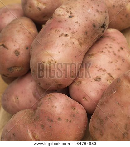Many unpeeled raw red potatoes as background closeup vertical view