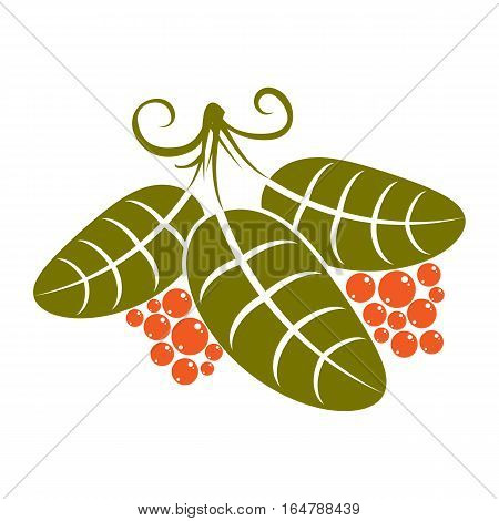 Three Simple Green Vector Leaves With Tendrils And Orange Seeds, Stylized Nature Herbal Element. Eco