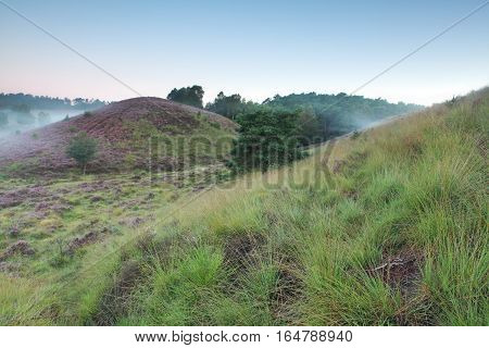 green grassy hills and heather in morning fog