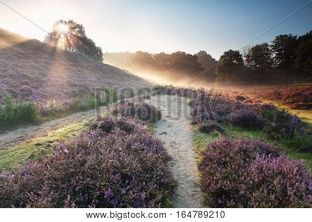 sunbeams behind the hill and flowering heather in summer