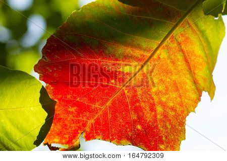 Fresh leaf texture or leaf background for design with copy space for text or image