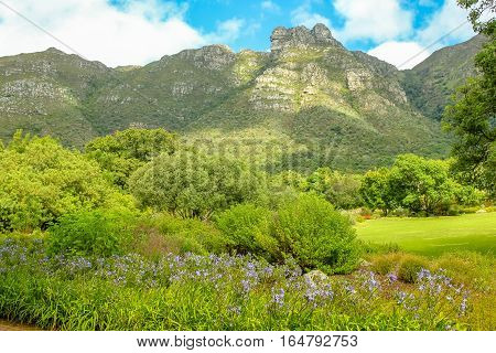 South Africa. Cape Town. Kirstenbosch National Botanical Garden with a panoramic view of Table Mountain in a sunny day.