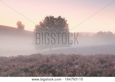 misty morning with tree and wildflowers Posbank Netherlands