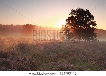 tranquil misty sunrise on heathland Gelderland Netherlands
