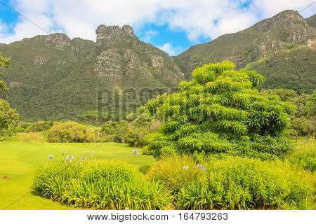 Panoramic view of Table Mountain National Park as seen from Kirstenbosch National Botanical Gardens in Cape Town, South Africa.