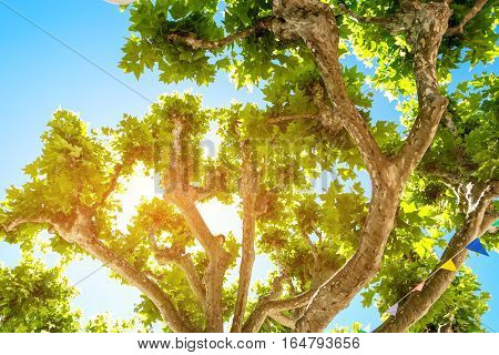 Tree branches on sky background. Green foliage and sunshine. Peace and beauty.