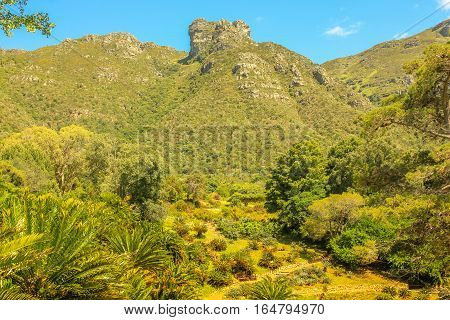 Panoramic view of Table Mountain National Park as seen from Kirstenbosch National Botanical Gardens in Cape Town, South Africa. Kirstenbosch is a UNESCO World Heritage Site. Sunny day, summer season.