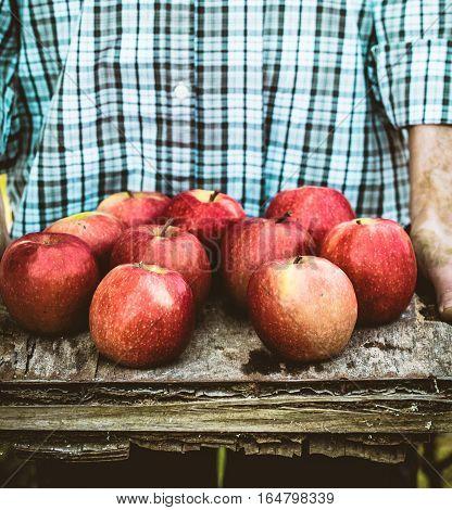 Organic fruit. Farmers hands with freshly harvested fruit. Fresh organic apples.