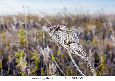 Field of grass covered with frost. The first September frosts in Siberia