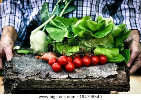 Organic vegetables. Farmers hands with freshly harvested vegetables. Fresh organic lettuce and tomatoes