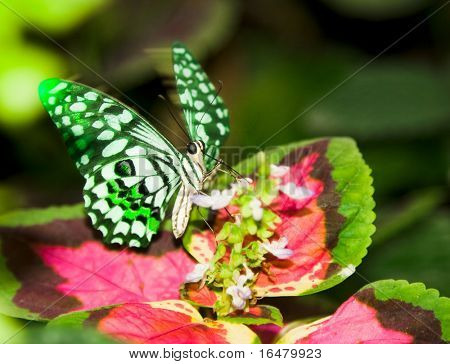 a butterfly flittering wings on a leaf