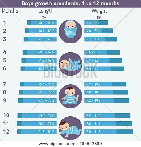 Child development infographics. Boys growth standarts: 0 - 12 months.