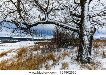 Tree in a landscape covered in snow. Moravian landscape Vavrinec.
