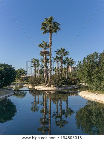 Gardens in the old dry riverbed of the Turia river - reflection of Palm trees in the artificial canal water. Europe, Valencia, Spain, Gigapan