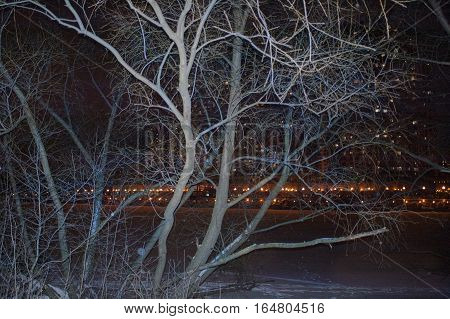 Frozen tress in the foreground and a city light in the blurred background outdoor filtered night shot