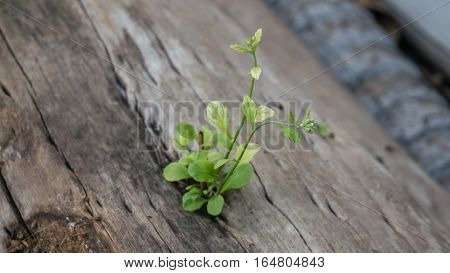 Plant Grows In Old Wood