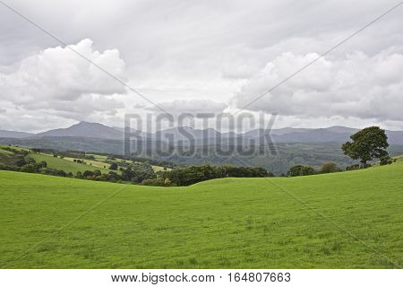 Panoramic view of Snowdonia mountain range Wales, UK, with green meadow and tree in foreground