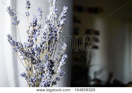 Dried Lavender Selective Focus Tranquil Relaxing Background Image with room for copy