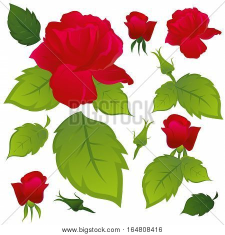Red roses with green leaves. Part of the pattern. Vector illustration.
