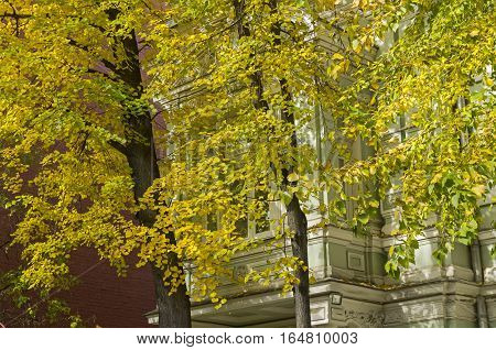Autumn in the city - a building window hidden by yellow autumn leaves. Moscow sunny day in October.