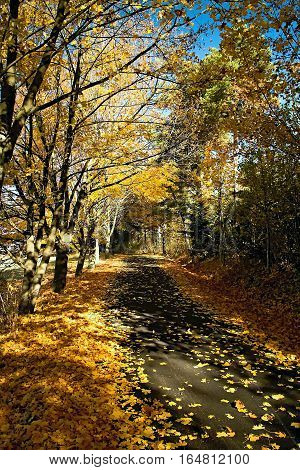 Way to Haj-Nicovo covered with autumn leaves.