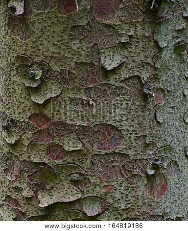 Flakey green tree bark texture with circular impressions and red accents