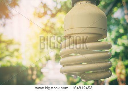 fluorescent light bulb in bright garden background.