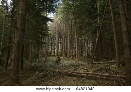Forest clearing with fallen trees, forest floor and sky