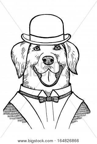 Portrait of a Labrador retriever with a bowler hat - vector