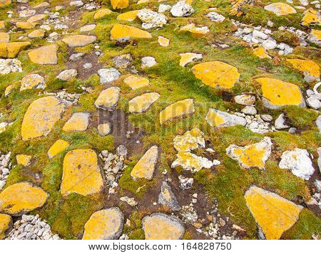 Yellow lichen on big stones embedded in grass in Tierra del Fuego National Park