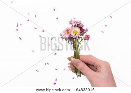 A small bouquet of purple flowers on a white background. Space for your text .Polevye flowers in female hand. Petals go up. Natural composition