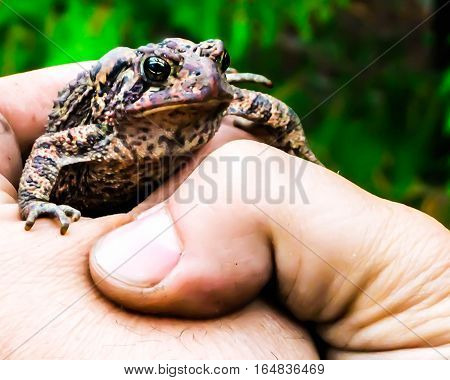 A toad holding onto the hand that is holding him.