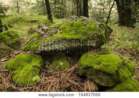 Moss and lichen covered stones. Bright green moss Background textured in nature.