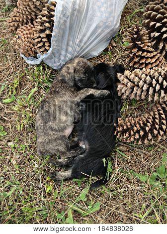 Cachorritos dormidos despues de haber jugado todo el dia en el bosque
