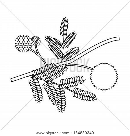 Yellow mimosa flower icon in outline design isolated on white background. Australia symbol stock vector illustration.