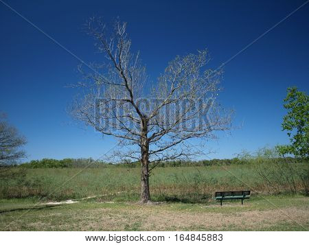 Lonely Tree along Dry River Bed Against Deep Blue Sky