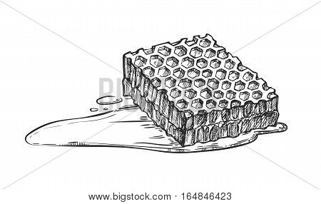 Honeycomb freehand pencil drawing isolated on white background vector illustration. Organic nature sweet honey product, delicious traditional food monochrome sketch. Honeycomb icon in vintage style.