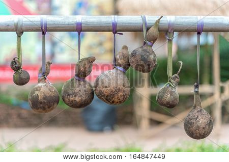 Dry calabash hang on the wooden. textured