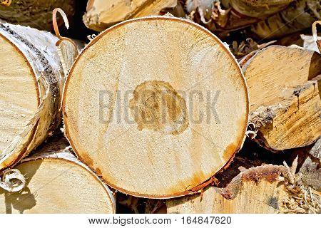End Of Round Birch Logs