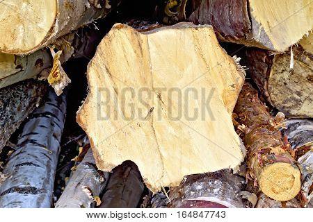 Logs Birch