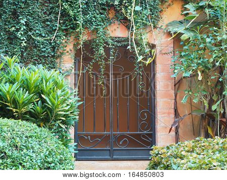 Iron door vintage style with green creeper plant and tree.