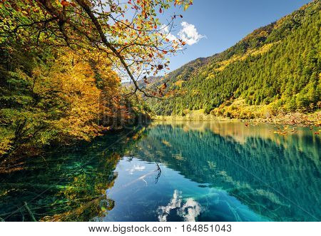 Fantastic View Of Lake With Submerged Tree Trunks