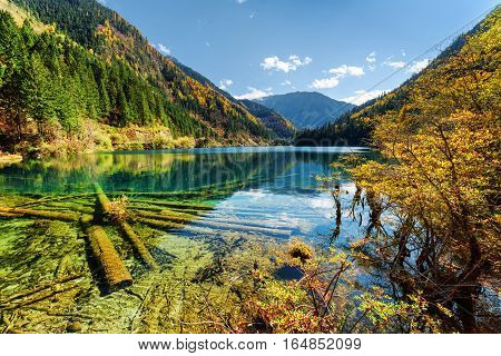 Beautiful View Of The Arrow Bamboo Lake With Crystal Clear Water