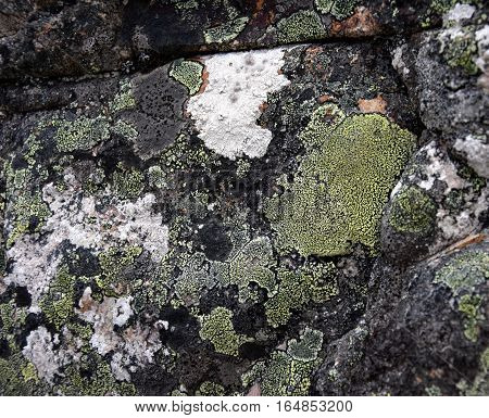 The close up moss on the rock surface. Abstract natural background texture of stone with green moss. Fungus texture on the rock. Old stone surface with lichen. Green moss on the stone background.